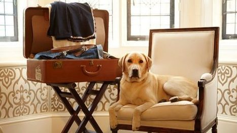 Alberghi Pet Friendly: lusso a quattro zampe   Bau Bau News - Amici a 4 Zampe   Scoop.it