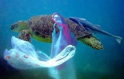 Ocean Plastic's Impact on Sea Life, Your Seafood and Wild Sea Turtles | rhinos | Scoop.it