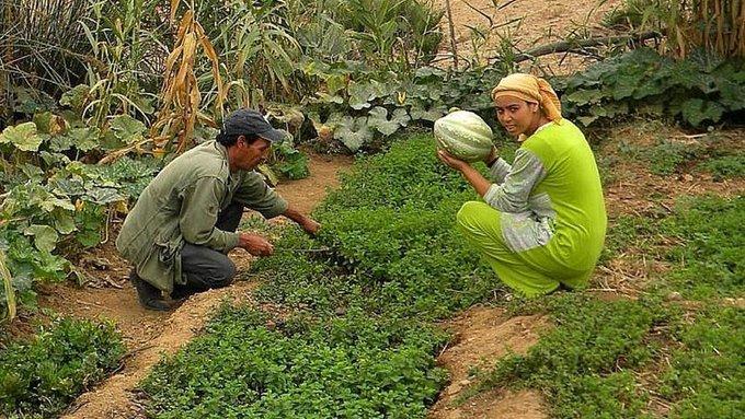 Un village passe de la misère à l'abondance grâce à la permaculture