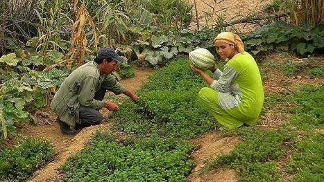 Transfiguré par la permaculture, un village passe de la misère à la richesse en 3 ans seulement ! | Nouveaux paradigmes | Scoop.it