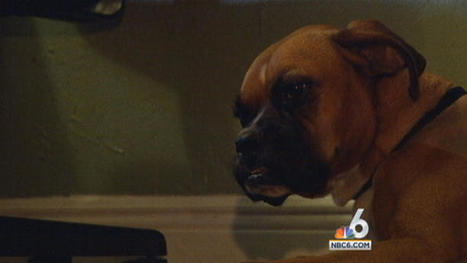 Police Search for Man Who Stabbed Dog Multiple Times in Hialeah | BloodandButter | Scoop.it