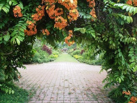 Penang Botanic Gardens | Adelle's Destinations | Scoop.it
