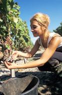 Economie - Le vin de Bordeaux en première ligne | Agriculture en Gironde | Scoop.it