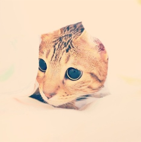 InstaWeek #1 / Attention Chat Mignon: Lucy The Bengal Cat | Chat Bengal | Scoop.it