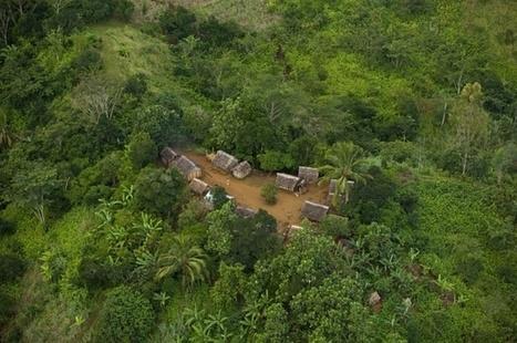 13 millions d'hectares de forêts sont détruits dans le monde du fait de la deforestation chaque année.   envir-infos   Scoop.it