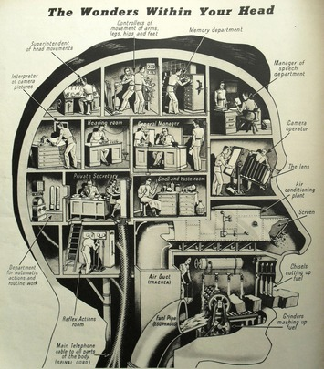 The Wonders Within Your Head [Infographic] | Nerdy Needs | Scoop.it