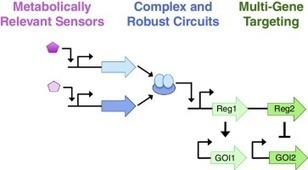 Programmable genetic circuits for pathway engineering | SynBioFromLeukipposInstitute | Scoop.it