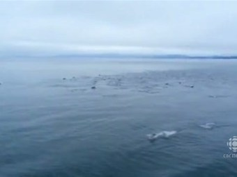 RAW: Dolphins swim next to ferry | All about water, the oceans, environmental issues | Scoop.it