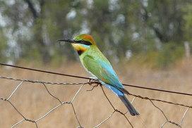 Can we offset biodiversity losses?   Nature + Economics   Scoop.it