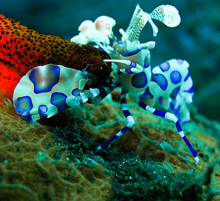 Diving - Enjoy, Not Destroy - SCUBA News | All about water, the oceans, environmental issues | Scoop.it