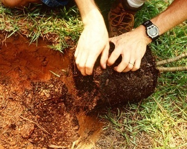 Not All Soil is Created Equal - Backyard Wisdom | Good Gardening News and Advice | Scoop.it