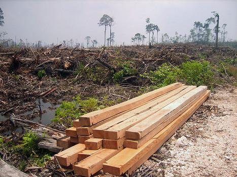 Une espèce végétale sur cinq en danger d'extinction | Chimie verte et agroécologie | Scoop.it