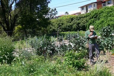 La permaculture peut-elle faire vivre des agriculteurs? | Villes en transition | Scoop.it