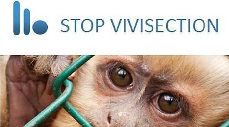 La UE admite a trámite una iniciativa ciudadana contra la experimentación animal   Medio ambiente   Scoop.it