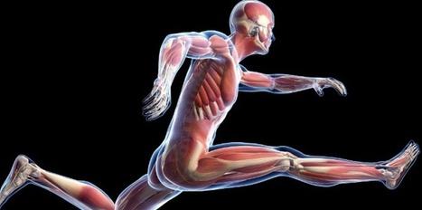 Un traitement pour reconstruire le muscle devrait être approuvé en 2016   Médicaments   Scoop.it