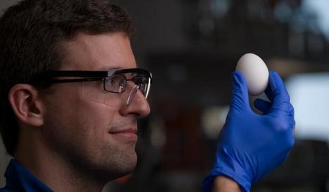Scientists Figure Out How to Unboil an Egg | Quite Interesting News | Scoop.it