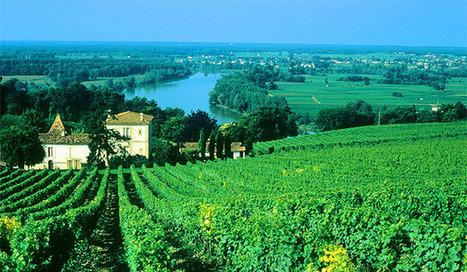 Bravo Bordeaux   Vitabella Wine Daily Gossip   Scoop.it