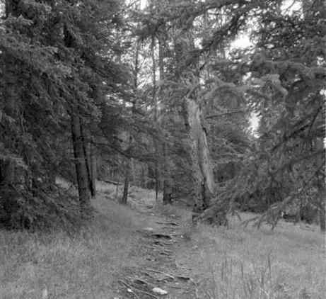 Janet Cardiff & George Bures Miller | Forest Walk | 1991 | DESARTSONNANTS - CRÉATION SONORE ET ENVIRONNEMENT - ENVIRONMENTAL SOUND ART - PAYSAGES ET ECOLOGIE SONORE | Scoop.it