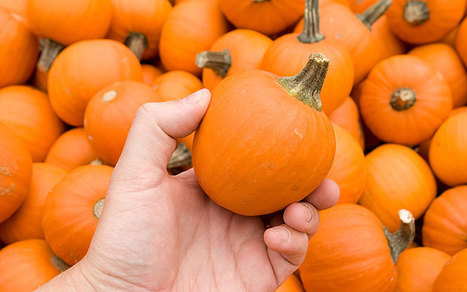 Pumpkin, turnips and swedes: the most dangerous vegetables revealed | Quite Interesting News | Scoop.it