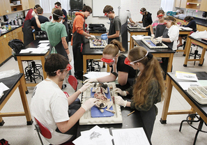NH policy aimed at students who don't want to work on animals | Ending the Use of Animals in Science | Scoop.it