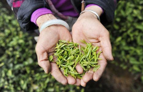 Les 7 variétés de thé chinois que vous devez connaitre - Quotidien du Peuple | Pâtisserie | Scoop.it