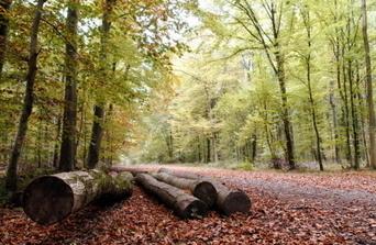 Territoire de Belfort : le chien abandonné attaché à un arbre | CaniCatNews-actualité | Scoop.it