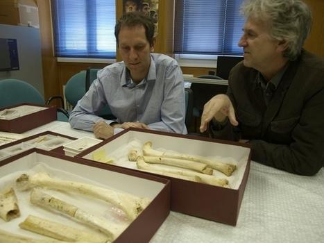 El ADN más antiguo de la Historia, hallado en la Sima de los Huesos - Diario de Burgos | historian: science and earth | Scoop.it