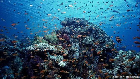 Our Oceans Are Dying: Mass Extinction May Be Inevitable | OUR OCEANS NEED US | Scoop.it