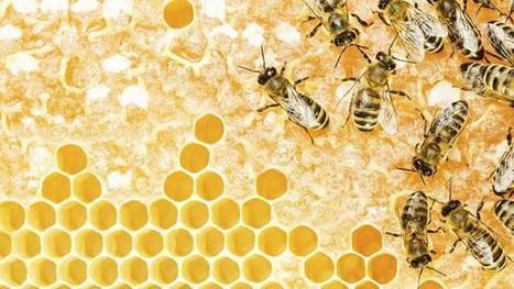 Health benefits from the beehive | Health from the Hive | Scoop.it