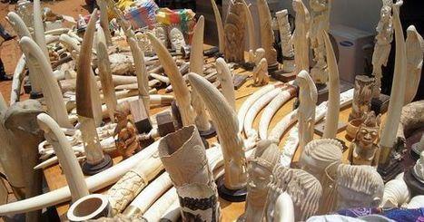 Les espèces protégées, proies des nouveaux riches dans les pays émergents | Ecology view | Scoop.it