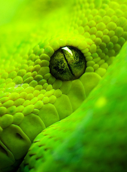 Green,Snake,Photography,Macro | A Creative Universe | Visual Inspiration | Scoop.it