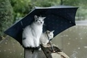 Природа мстит за жаркое лето: тепла больше не будет - СЕГОДНЯ | природа | Scoop.it