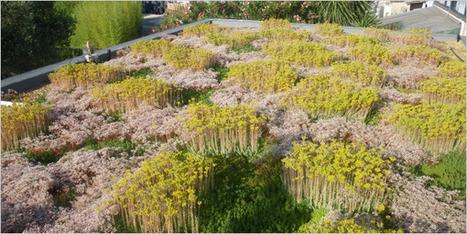 Graviland-Tech : la solution de toiture-terrasse végétalisée pour surmonter les contraintes climatiques grâce à son arrosage automatisé | Immobilier | Scoop.it