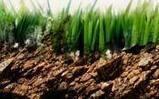 The Growing Schools Garden | Education | Scoop.it