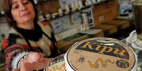 Aveyron : Kipu, le fromage qui sent bon l'originalité ! | L'info tourisme en Aveyron | Scoop.it