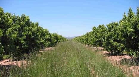 Lo que debes saber de las cubiertas vegetales | Periodismo Ecológico Ambiental | Scoop.it