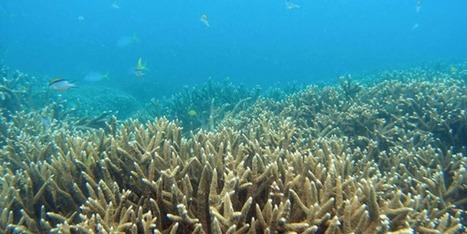 Australie : la Grande barrière de corail ne se meurt pas, assure Canberra   Planete DDurable   Scoop.it