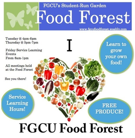 Florida Gulf Coast University Food Forest | Permaculture Design Review | Scoop.it