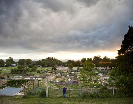 Community gardens improve personal and neighborhood health, CU-led ... | School Kitchen Gardens | Scoop.it