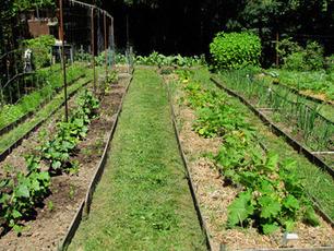 Documenting the Urban Farming Boom | Vertical Farm - Food Factory | Scoop.it