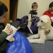 Standard poodle helps Orrington schoolchildren develop reading skills - Bangor Daily News | Getting children reading | Scoop.it