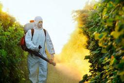 Pro pest control service company in Columbia SC - top exterminator | Mills Termite & Pest Control | Scoop.it