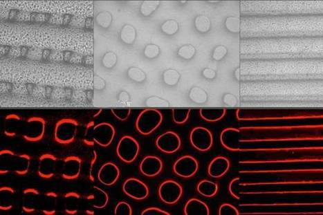 How to hide like an octopus: New materials to quickly change color and texture | Amazing Science | Scoop.it