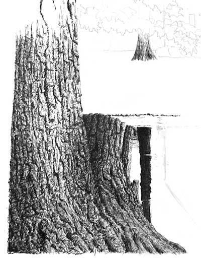 Drawing Trees (stumps and trunks), pen and ink art instruction | Drawing and Painting Tutorials | Scoop.it