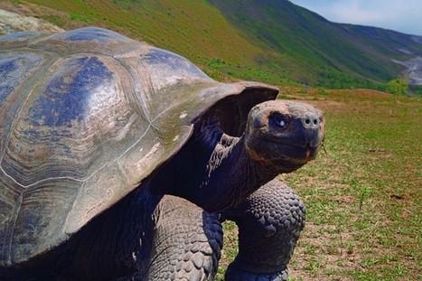 Un groupe de tortues se reproduit pour la 1ère fois en 100 ans | The Blog's Revue by OlivierSC | Scoop.it