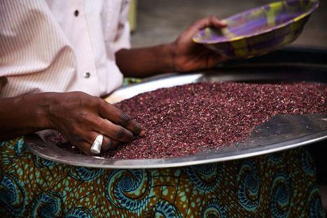 Agritools, l'Afrique de l'agriculture, des start-up et de ses jeunes dirigeants. | Questions de développement ... | Scoop.it