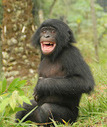 Bonobos That Can't Handle Drama Have Trouble Making Friends | Animales | Scoop.it