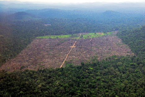 How better-trained farmers slow Brazil's deforestation | Climate Smart Agriculture | Scoop.it