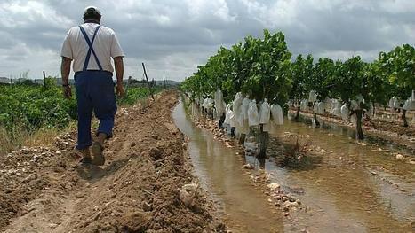 España se queda definitivamente sin ayudas de pago directo para la mayoria de frutas y hortalizas | Sector hortofrutícola | Scoop.it
