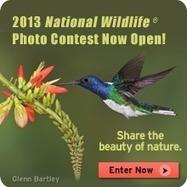 Habitat Loss - National Wildlife Federation | 3rd grade pbl | Scoop.it